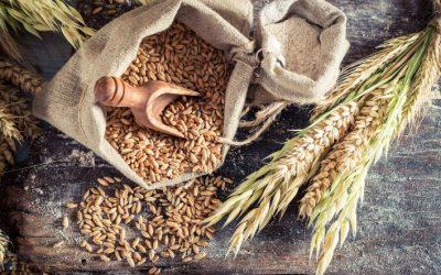 Segale e pane di segale: proprietà e caratteristiche